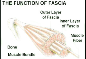fascia detail for personal training